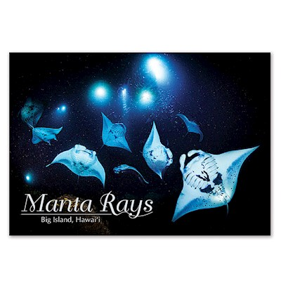 Manta Rays 4 X 6 Big Island Postcards