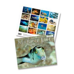 2021 Trade Calendar, Marine Life of Hawaii