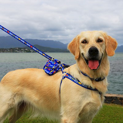 Pet Harness, Surf's Up - L